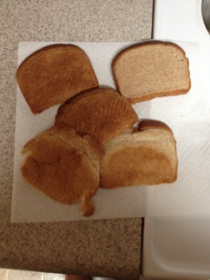 Girlfriend said theres only one piece of bread left I counted and shes right