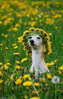 Girls at music festivals
