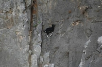 Goats are literally masters of physics The fourth dimension is not time it is goat
