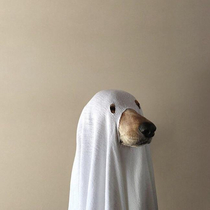 Goodest ghost