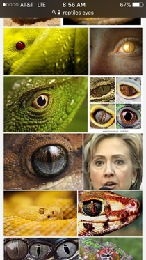 Google searched reptiles eyes for an art project