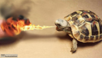 Googled fire turtle Im satisfied now