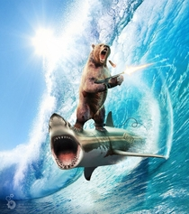 Googled shark surfing was not disappointed