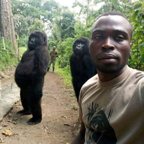 Gorillas posing for groupfies with anti-poaching officers in Congo look like theyre about to drop the hottest beat of the summer