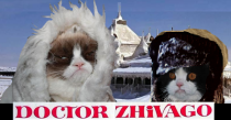 Grumpy Cat and her brother do Dr Zhivago