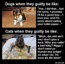 Guilty dogs vs guilty cats