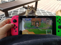 Had a visitor while playing animal crossing