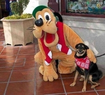Happy dog meets Pluto