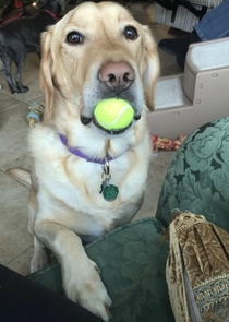 He always brings me his favorite ball to cheer me up when Im sad