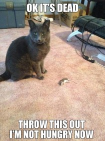 He caught a mouse