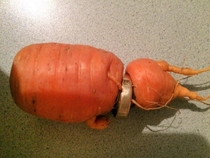 He lost his wedding ring while harvesting carrots
