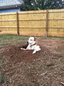 He loves digging holes and then sitting in them and staring at everybody