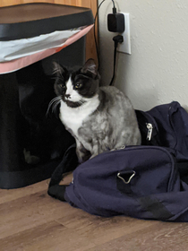 He sits on my duffle bag and glares at my girlfriend