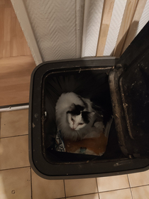 Heard some noise in the night got up to find out my cat basically threw itself in the bin