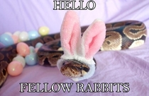 Hello fellow rabbits