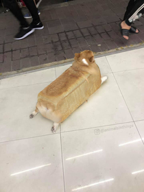 Here is an inbread dog