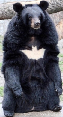 Hes the Bear Gotham deserves but not the one it needs