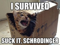 Hey Schrdinger Whats coming out of that box
