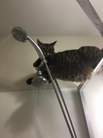 Hey what are you doing You taking a shower Thats cool Ill just hang out here