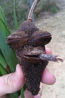 Highest acorn ive ever seen x-post rtrees