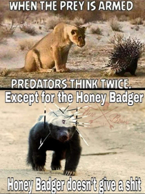 Honey badger dont give a shit