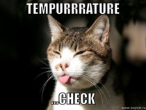 How cats check for temperature in the morning
