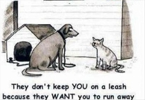 How dogs try to rationalize