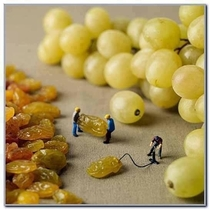 How grapes are created