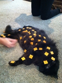 How many Cheez-its can you fit on your cat before it wakes up x-post rTrollingAnimals
