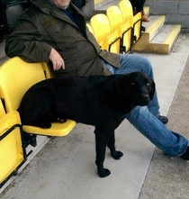 How my dog likes to sit at football with my dad