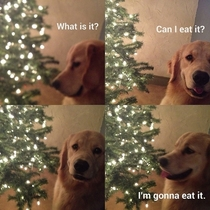 How our dog see Christmas ornaments