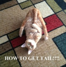 How to get tail
