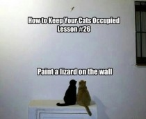 How to keep your cats occupied