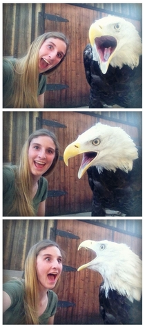 How to take selfies with a bald eagle