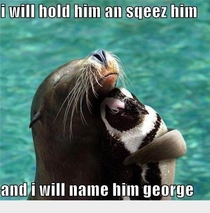 humor seal sea lion hugging cuddling penguin