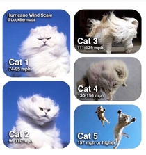 Hurricane Cats