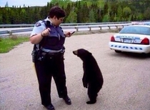 I bet you wouldnt have pulled me over if I was a polar bear