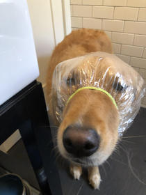 I bought a shower cap for my dog Riker He still hasnt forgiven me