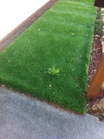 I bought fake grass because I am bad at gardening I am not that bad Never mind I suck