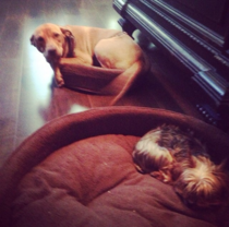 I bought my dogs beds but I dont think they get it
