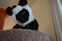 I cant believe I even questioned whether or not an  cat-sized panda hat was a good investment or not