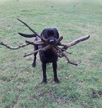 I couldnt remember which stick you threw