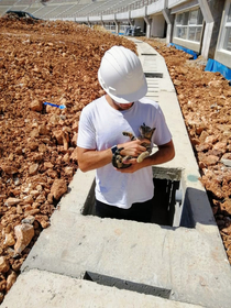 I found a kitten on my construction site today  work got done after that