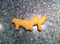 I found Requiem for a Dream in my Animal Crackers