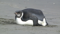 I googled Fat Penguin I was not Disappointed