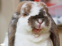 I guess you could say thats a Funny Bunny