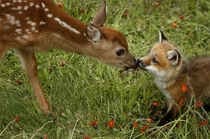 I heard you all like baby animals Heres a fawn and a kit