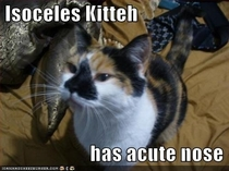 I is acute kitty
