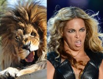 I Knew I Had Seen That Lion Before