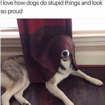 I love how dogs do stupid things and look so proud